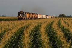 IC in a High Sea of Corn (Jake Branson) Tags: train railroad union pacific up locomotive illinois central il block sidney corn villa grove deathstar emd sd70 1017