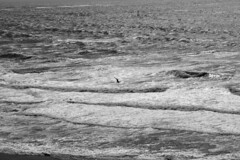 Bird Over the Ocean Mono (TheseusPhoto) Tags: nature landscape blancoynegro blackandwhite monochrome ocean waves sea bird silhouette naturephotography natureporn landsend sanfrancisco