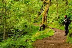 Padley Gorge selfie (DRWeaver) Tags: woodland trees summer landscape nature nationaltrust derbyshire outdoors peakdistrict longshaw padleygorge danweaver derbyshiredalesdistrict england unitedkingdom gb