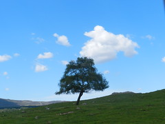 The Lone Tree, Highland Wildlife Park, Kincraig, May 2018 (allanmaciver) Tags: lone tree highland wildlife park shade shadow clouds weather sky may warm sunny solitary beauty allanmaciver