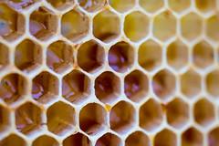 65100899-LR-3000 (the.digitaleye) Tags: honey comb honeycomb bee honig biene waabe macro canon nfd 50mm f35 pattern muster symmetrie symmetry symmetric sechseck hexagon wax wabe struktur structure