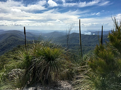 Gold Coast horizon with burnoff ([S u m m i t] s c a p e) Tags: goldcoast grasstree springbrooknationalpark thepinnacle xanthorrhoea hiking trailrunning springbrook queensland australia