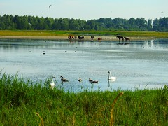 Katinger Watt 3 (Sophia-Fatima) Tags: eiderstedt nordfriesland schleswigholstein deutschland naturschutzgebiet naturerlebnisraumkatingerwatt euvogelschutzgebiet
