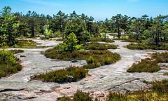 Pine Forest with Sea Glimpse (bjorbrei) Tags: forest pines pineforest trees rock backlight sea ocean sky heather heath sprinkle gressvikmarka gressvik fredrikstad norway