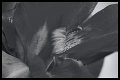 Tokyo Metropolitan Area: Impressions of a great city (Matthias Harbers) Tags: monochrome city street life impression blackandwhite photo border classic japan photography impressions forest tree sky kashiwa chiba park nature animal wood grass spring walk building architecture panasonic dmctx1 photoshop elements topaz tokyo metropolitan lumix zs100 road car tz100 living bw black white