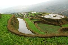 Paddy fields, Guizhou, China (water.alternatives) Tags: china paddyfields