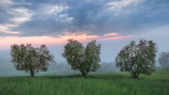 Lovely Morning (Visual Lyrics Photography - Ernie Vater) Tags: tuscany italy trees field heart love soft morning fog fields green landscape travel sunrise