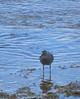 IMG_6175 (stevefenech) Tags: south pacific islands travel adventure stephen steve fenech fennock marshall birds