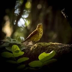 birds-3 (stevejordan56) Tags: nisqually birds