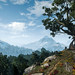 The Witcher 3: Wild Hunt / Tree Shrine
