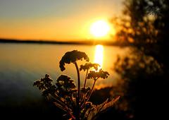 Sunset Silhouette (Glenda Hall) Tags: sunset silhouette canon60d loughfea cookstown northernireland june2018 glendahallphotography