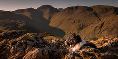 27/52 Mountain Dawn (JJFET) Tags: 27 52 weeks for dogs paddy border collie mountain