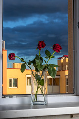 Red Roses (andrius_) Tags: stilllife glass sky window flowers vase rose