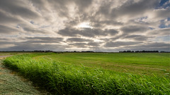 Texel skyscape (Rob Schop) Tags: lr wideangle sheep landscape hoyaprofilters sonya6000 nederland outdoor clouds sunbeams jacobsladder multipleexposure pola samyang12mmf20 texel ps a6000 f8 wolken field