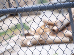 Big Bear Alpine Zoo 20180713 (caligula1995) Tags: 2018 alpinezoo bigbear bigbearlake roadtrip