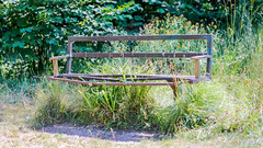 Ashlawn Railway Cutting disused 15th July 2018 (boddle (Steve Hart)) Tags: ashlawn railway cutting disused 15th july 2018 steve hart boddle steven bruce wyke road wyken coventry united kingdon england great britain canon 5d mk4 6d 100400mm is usm ii 2470mm standard rugby unitedkingdom gb 85mm f14 prime wild wilds wildlife life nature natural bird birds flowers flower fungii fungus insect insects spiders butterfly moth butterflies moths creepy crawley winter spring summer autumn seasons sunset weather sun sky cloud clouds panoramic landscape