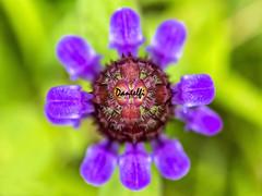 Descubriendo microplanetas - Discovering microplanets (danielfi) Tags: macro macrofotografía flor flower creativa creative naturaleza nature ngc pétalos petals color