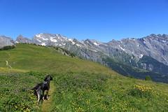 Nasco sur la Grand Garde (bulbocode909) Tags: valais suisse ovronnaz grandgarde chiens nature montagnes sentiers vert bleu paysages laseya muverans hautdecry névés neige