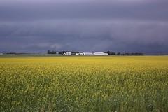 Storm Clouds & Farm (Craigford) Tags: kelvingrove pei canada sky storm clouds field mustard farm rural