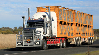 Livestock ~ Hume Fwy/Olympic Way (2/3)