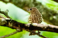 XD4A0007-1 (mayekarulhas) Tags: canon johnheinznaturereserve bird wildlife wild