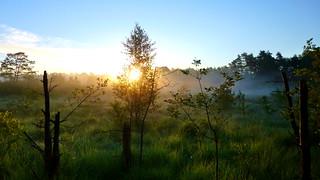 Morgendämmerung Mit Viel Nebel