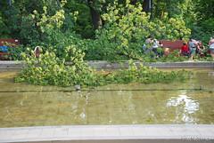 Київ, Ботанічний сад імені Фоміна Ukraine InterNetri 17