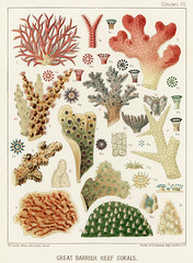 Great Barrier Reef Corals from The Great Barrier Reef of Australia (1893) by William Saville-Kent (1845-1908). Digitally enhanced from our own original edition.Fig 1 : Seriatopora HystrixFig 2 : Stylopora PalmataFig 3 : Pcillpoora DamicornisFig 4 : Oculin