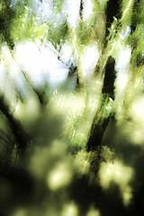 Floodplain (egyugrasatavasz) Tags: floodplain river danube nature trees