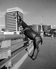 Deer Sculpture on Rich Street Bridge - Columbus, Ohio (ryanungeronline) Tags: 120film 2017 fomapan200 ilfosol3 pentax67 bw bwnegative filmphotography