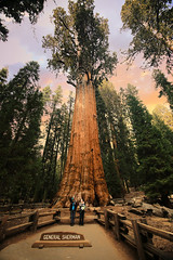 General Sherman Tree (wyojones) Tags: california generalsherman giantsequoia sequoiadendrongiganteum gaintforest sequoianationalpark tree plant trail sign nate kirsten family wyojones