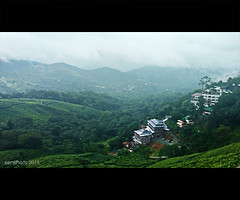 Munnar, Tea Estate and Resort Aerial View (SenShots / Senthilmani's Photography) Tags: munnar kerala senshots senthilmani hills fog clouds buildings terrain slope topography trees bushes plants green sky nature landscape