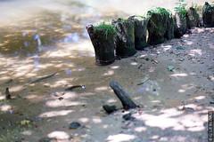 DSC01108 (g.lebloas) Tags: bois eau sable