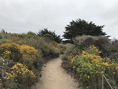 20180618_185118334_iOS (jimward85) Tags: pointlobos carmelbythesea montereybay california