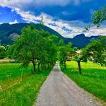 Tree-lined path in Breitenau near Kiefersfelden, Bavaria, Germany thumbnail