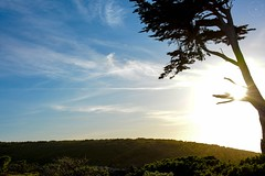Point Reyes (LauraJSwindle) Tags: foliage northerncalifornia nikond7100 ca pointreyesnationalseashore pointreyes california silhouette sunflare clouds wantaghfairfield nyca usa landscape sky driveby