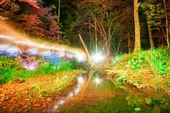 Lighting Up Aaron's Creek (tackyshack) Tags: light painting lightpainting longexposure lightjunkie gels umbrella leds creek reflection oneexposure lightpainter lightphotography lp tackyshack ©jeremyjackson