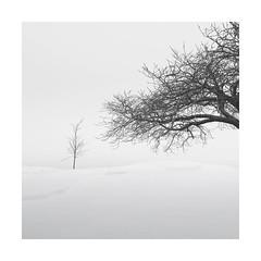 Don't stare (Nick green2012) Tags: minimalism blackandwhite square silence