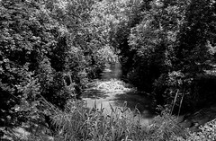 Creek Near the RR Depot B&W (Neal3K) Tags: americus bw blackandwhite fppc41kit ga georgia homedeveloping kodakektar100 nikkorc35mmf25lens nikons335mmfilmcamera