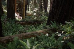 Prairie Creek Redwoods State Park (ihynz7) Tags: prairiecreekredwoodsstatepark california redwoods