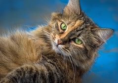 "1-cat-D75_0281-LR6 (John ""Igor S."" Moffitt) Tags: nikkor ais 200mm f4"