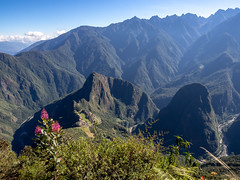 Machu Picchu with Flower, Wider Shot