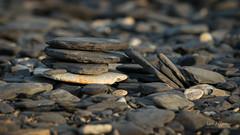 _DSC3501.jpg (fotolasse) Tags: sonyölandormvråkfåglar öland natur kalmar ottenby långejan fyr canon sony bird birds fåglar vatten hav water sea sweden sverige