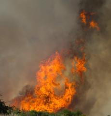 Fire Dance (ArtGordon1) Tags: wansteadflats wanstead london england uk fire flames eppingforest davegordon davidgordon daveartgordon davidagordon daveagordon artgordon1 summer july 2018