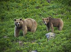 Bears (diegomaradonatuapse) Tags: bear nikond7200 sigma150600 sigma150600contemporary