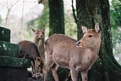 000016 (stonkolegg) Tags: japan nippon nara nikon fm nikkor 50mm 14 film photography fuji fujifilm superia iso 400 27 exp