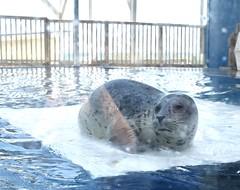 Sealing the Pic (donna_0622) Tags: seal gulfarium fl florida vacation summer nikon d750