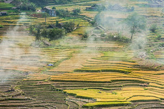 K6545.0915.Lao Chải.Sapa.Lào Cai (hoanglongphoto) Tags: asia asian vietnam northvietnam northwestvietnam nortthvietnam landscape scenery vietnamlandscape vietnamscenery vietnamscene sapalandscape terraces terracedfields harvest village homes house hillside canon canoneos1dsmarkiii canonef100400mmf455 6lisusm tâybắc làocai sapa laochải phongcảnh ruộngbậcthang phongcảnhsapa ruộngbậcthangsapa lúachín mùagặt sapamùagặt sapamùalúachín bảnlàng nhữngngôinhà sườnđồi terracedfieldsinsapa