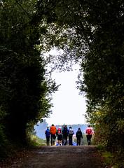 Peregrinos / Pilgrims (López Pablo) Tags: forrest tree path people pilgrim wayofsaintjames galicia spain nikon d7200