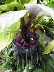EXOTIC PLANT (carolynthepilot) Tags: worldtraveller worldtraveler carolynbistline carolynthepilot carolynsuebistline carolyn goldenwings getaway gulf holiday highfive flickrmindset florida flickmindset fl interesting image postcard nationalgeographic nature nationalgeo ngc carolynsworld bistline bbc bbcsponsored bucketlist bestphoto explore adventure amazing landscape lifestyle leisure coastal suncoast westcoast destination digitalimage destinationgetaway michael mike mustsee flower plants selbygarden botanical botany green beautiful ng world travel vacation trip romantic metro retro urban traveller photoshoot picture coast